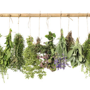 Enjoying Summer Botanicals: a Quick & Easy Guide
